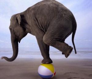 finding balance elephant